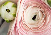 flowers / pretty blossoms + arrangements / by René Zieg