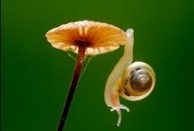 Mushroom madness / by Bryar Gullett