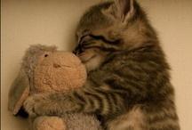 cuddle. / by Kaylynn Perry