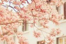 It's all Peaches / by Vanessa Bennink