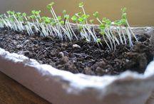 Gardening ideas / by Jackie Davis