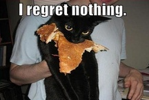 Kitty Humor! / by paige =^..^=