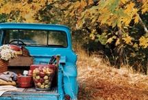 fall / my favorite season / by ~Cowgirl Lisa~