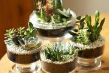 Terrarium Inspiration / Inspiration, ideas for future terrariums / by Allixandria Geiger