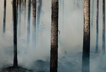 just a mist...  / by Deedee' tm