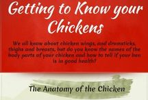 Chickens in my Yard / A place to collect and share all things Backyard chickens / by Robin Smith