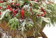 Christmas  / by Laura Verla