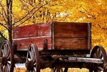 Autumn Charm. / Everyone must take time to sit and watch the leaves turn.  ~Elizabeth Lawrence  / by Jenny Shrum
