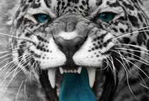 Football = Jacksonville Jaguars / by TRAVEL 2 UNRAVEL