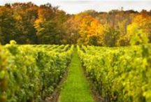 Fall Into Autumn / by Forbes Travel Guide