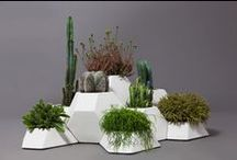 Indoor Gardens / by Sarah Chamizo