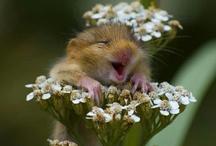 Animals:) cute & funny! / by Marisa Johnson