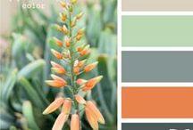 Color Ideas / by Amanda Pacetta