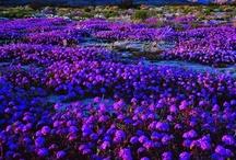 Purple passion / by Creative Wonders
