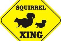 Squirrels - my little friends!! / by Everis Belding Hough