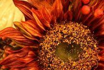 Flower Gardening / by LoveMyBooks