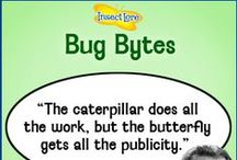 Insect Lore Bug Bytes / The Best Bug and Butterfly Quotes! / by Insect Lore