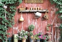 Garden / by Katherine Alvarez