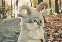 Fashionable Felines / by PawBag