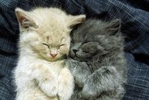 Cuddly Kittens / by PawBag