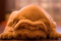 Too cute! / by Lina Egutkina