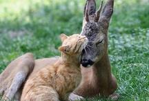Beautiful Animals / by Fariba Rassa