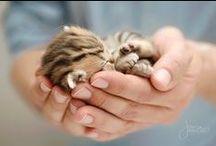 Little Ball Of Fur / by Karolina B.