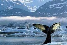 Alaska <3  / by Jennifer Isaza