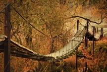 Time to Cross the Bridge / by Gena Coe