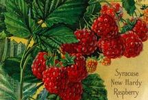 Vintage Seed Art / by Joy