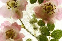 Flowers / by Linda Selzer