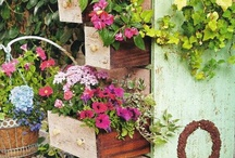 Flora  / Flowers, gardens, plants, backyard, outdoor crafts and ideas / by Jacky Cameron