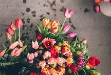 flowers & plants / by Angel Kittiyachavalit