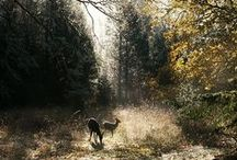Into the Forest / Woods, forest, trees and wildlife / by Emma Maytum