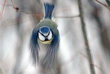 Birds / by Emma Maytum
