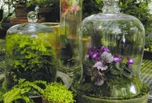 domes,cloches,apothecary jars,urns and trophies / by Becky Birdsong