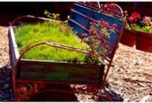 Gardening  / by P. Allen Smith