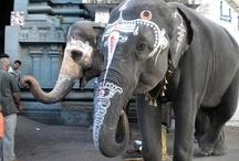 Incredible India / by Radhika   Tickling Palates