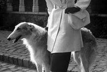 "Prestigious Puppy ""Vintage"" / by Prestigious Puppy"