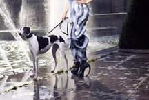 """Prestigious Puppy """"Fashion Hounds"""" / Couture loving Canines / by Prestigious Puppy"""