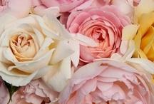 Flowers / by Leanne Sabine