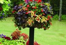 For The Garden / by Regina Gray