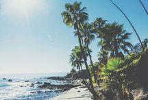 Palm Trees & Seas / by Jennifer Simmons
