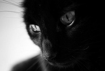 """BLaCk cAts... / """"Sometimes it happens that a black cat lets you pass in front of it."""" ~ Author Unknown / by Louise LeGresley"""