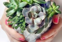 Indoor Garden Ideas / by Home Made Simple
