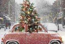 Merry Christmas Ya Filthy Animal / by Adrienne Kenyon