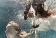 :: Underwater :: / by Pet Rock