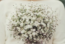 Wedding Flowers / by Sophie Hailwood