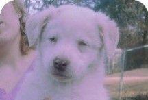 Adoptable Blind Dogs / by Jeanne Lander