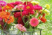 Freshcut Flowers / by Melissa Bickford